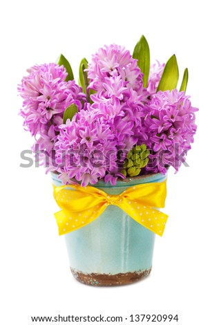 Beautiful Hyacinths in vase over white - stock photo