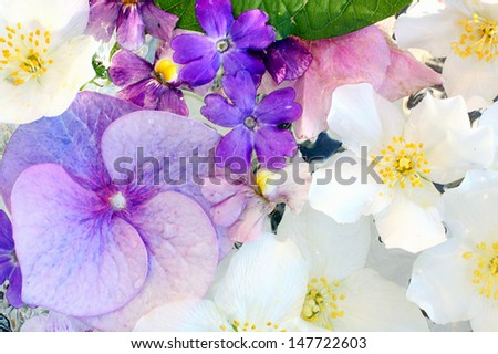 Beautiful hydrangea and jasmine flowers