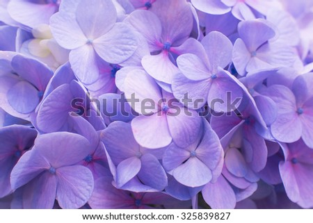 beautiful hydrangea floral background in pastel colors