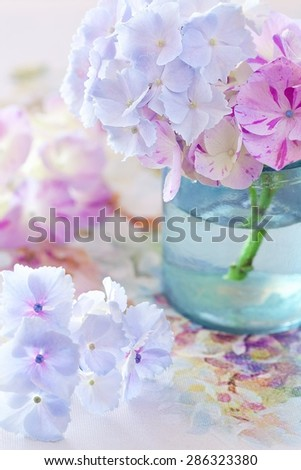 beautiful hydrangea flowers close-up in a vase  - stock photo