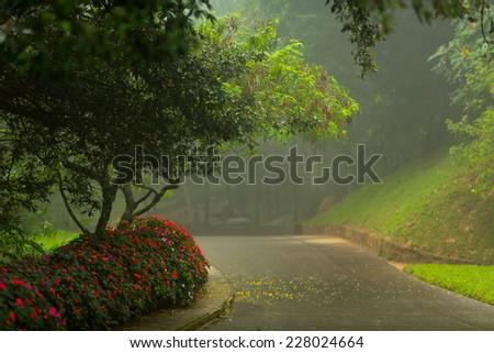 Beautiful image iof Botanical Garden Hakgala, Sri Lanka island, South Asia - stock photo