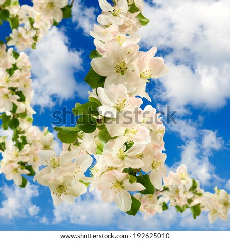 beautiful image of blossoming branches against the blue sky - stock photo