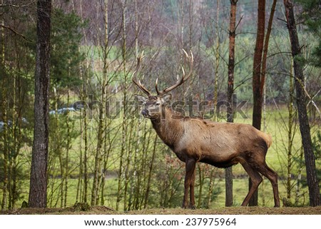 Beautiful image of deer stag in forest landscape of forest in Autumn - stock photo