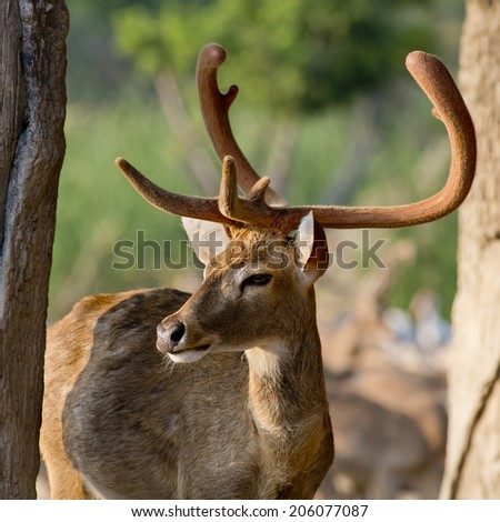 Beautiful image of red deer stag in forest