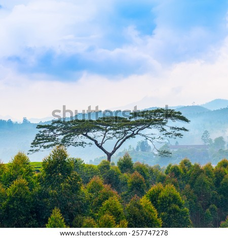 beautiful indian landscape with a trees and mountains in a pre-dawn haze, Kerala  - stock photo