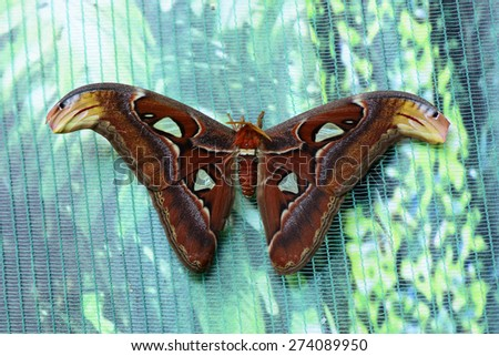 beautiful insect butterfly on a colored background macro - stock photo