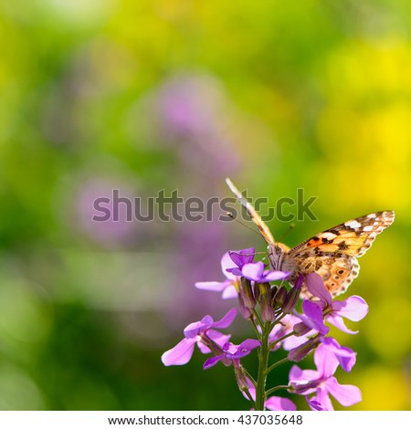 beautiful insect butterfly on a flower on a colored background macro