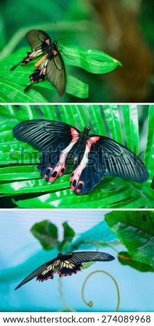 beautiful insect butterfly on leaves on a colored background macro - stock photo