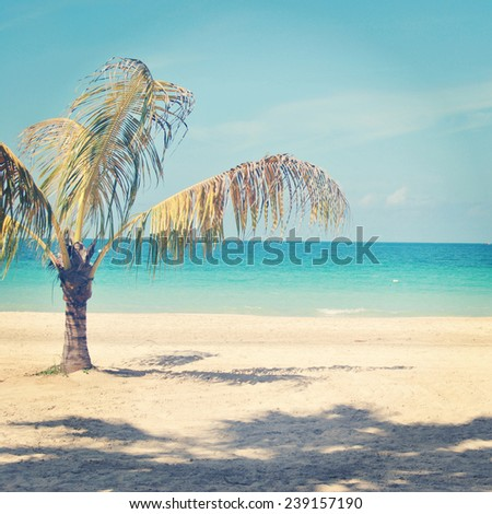 beautiful instagram of lone palm tree on a tropical beach with ocean - stock photo