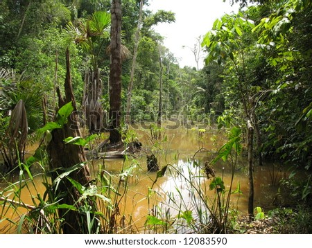 Beautiful, interesting, dengerous but also endangered rain forest in Amazon - Brazil - stock photo