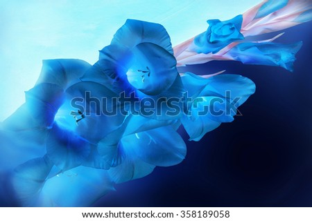 Beautiful iridaceae sword branch with vivid deep teal head with gently light cerulean sapphire center lying on dark denim color fond. Close-up view with space for text on art dividing design - stock photo