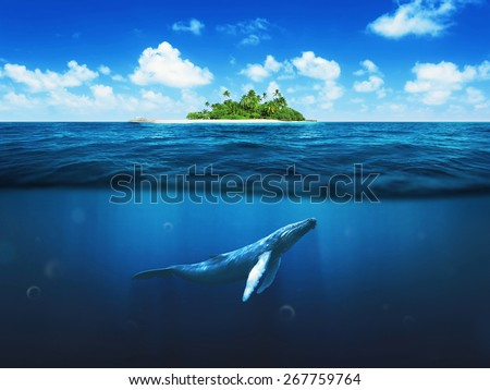 Beautiful island with palm trees. Whale underwater - stock photo