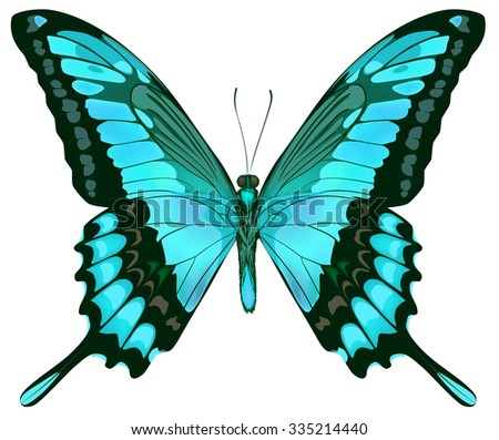 Beautiful isolated green blue butterfly - stock photo