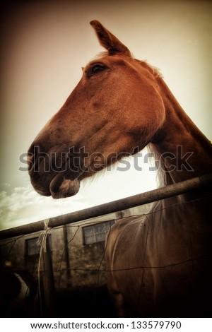 Beautiful Italian mare in pen - the region of Basilicata, Italy. - stock photo