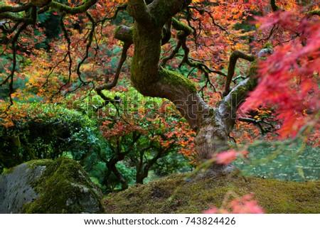 Beautiful Japanese Garden Portland Oregon USA Stock Photo (Royalty ...