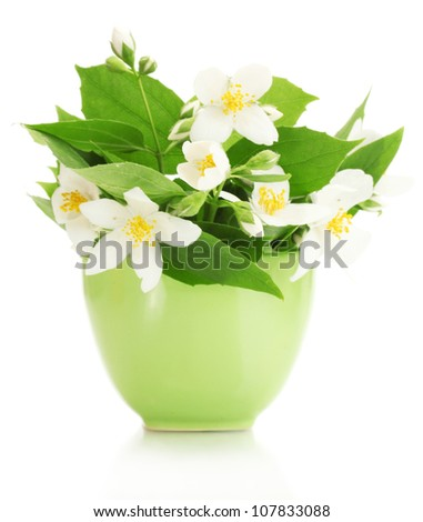 beautiful jasmine flowers in green vase isolated on white