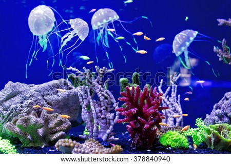 Beautiful jellyfish, medusa in the neon light with the fishes. Aquarium - stock photo