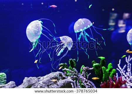 Beautiful jellyfish, medusa in the neon light with the fishes. Aquarium with blue jellyfish and lots of fish. Making an aquarium with corrals and ocean wildlife. Underwater life in ocean jellyfish. - stock photo