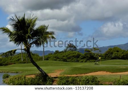 Beautiful Kauai Lagoons Golf course has family of Nene geese besides flag.  Leaning palm tree over lagoon. - stock photo
