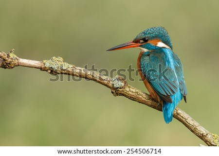 Beautiful kingfisher - stock photo