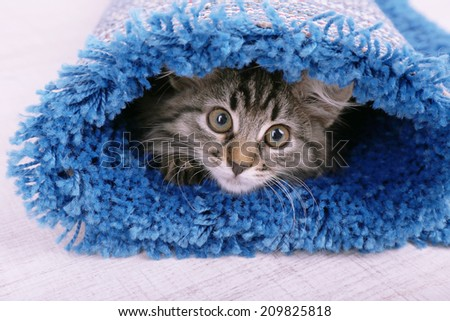 Beautiful kitten in rolled carpet, on light background - stock photo