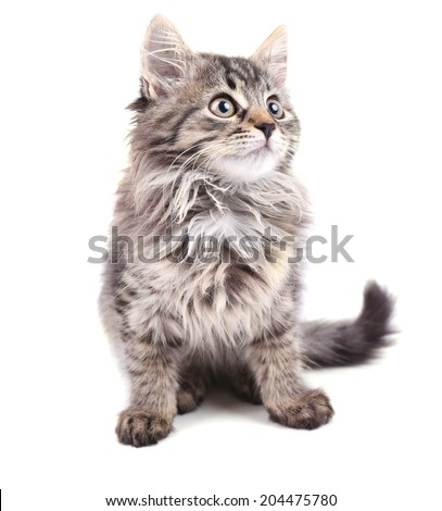Beautiful kitten isolated on white - stock photo