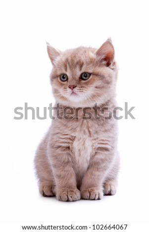 Beautiful kitten of ashy color isolated on the white