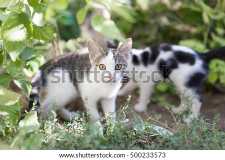 Beautiful kitten on nature