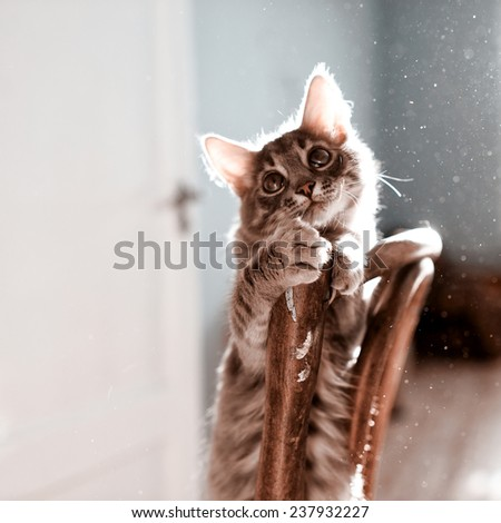 Beautiful kitten playing on a sunny day at home