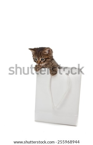 Beautiful kitten playing with white paper - stock photo