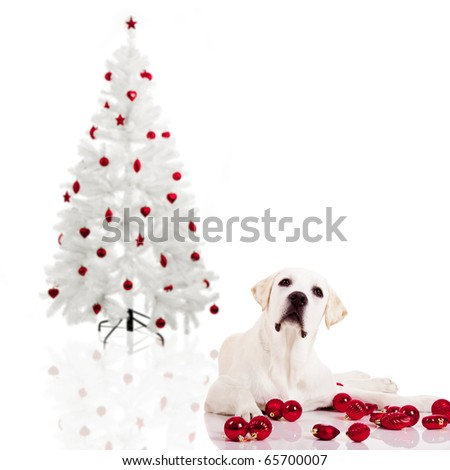 Beautiful Labrador retriever lying on the floor with a christmas tree on the background - stock photo