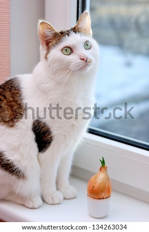 Beautiful lady cat sitting near to onion in the cup on the window sill