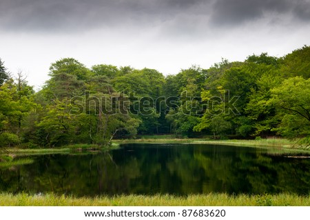 Beautiful lake landscape in a forest