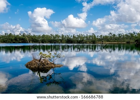 Beautiful lake view landscape in the Florida Everglades National Park with a coral rock and a young Red Mangrove tree.