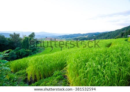 Beautiful landscape about terraced rice field - stock photo