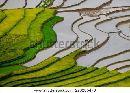Beautiful landscape about terraced rice field in water season in Mucangchai, Vietnam - stock photo