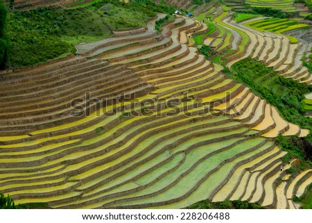 Beautiful landscape about terraced rice field in water season in Mucangchai, Vietnam