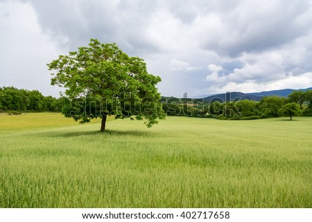 Beautiful landscape and lone tree in Tuscany.Italy - stock photo