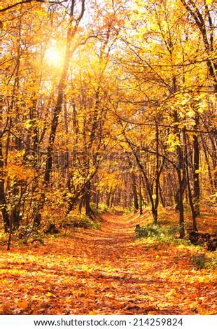 Beautiful landscape - autumn forest - stock photo