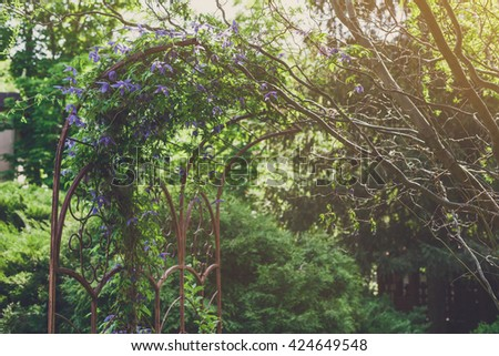 Beautiful landscape design, evergreen trees and flowers in sunlight. Modern landscaping: Fir trees, spruces, arborvitae, and metal arch with clematis vine. Summer garden or park design. - stock photo