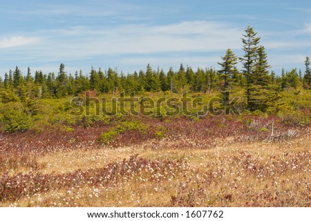 Beautiful landscape. Dolly Sods, Monongahela National Forest, West Virginia, USA - stock photo