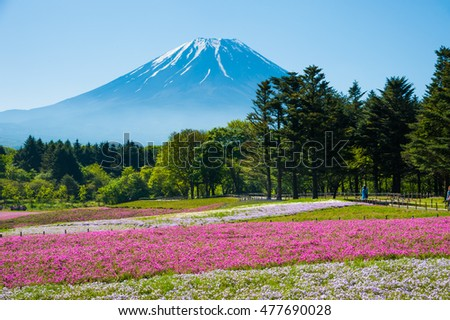 Beautiful landscape, Field of Shibazakura flowers and Snow on the Mt.Fuji with fog at Kawaguchi, Japan