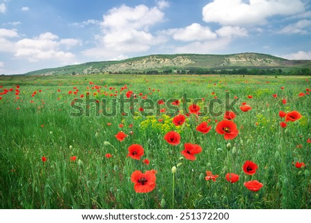 Beautiful Landscape. Field with red poppies. - stock photo