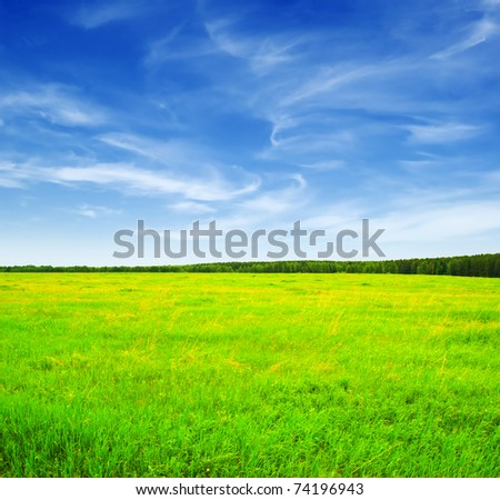 Beautiful landscape. Green grass and blue sky. - stock photo