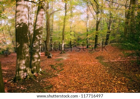Beautiful landscape image of forest covered in Autumn Fall color contrasting green and orange, brown and gold