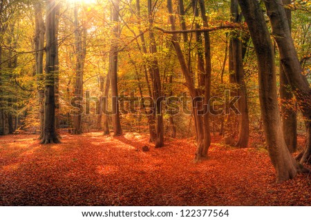 Beautiful landscape image of forest covered in Autumn Fall color contrasting green and orange, brown and gold - stock photo