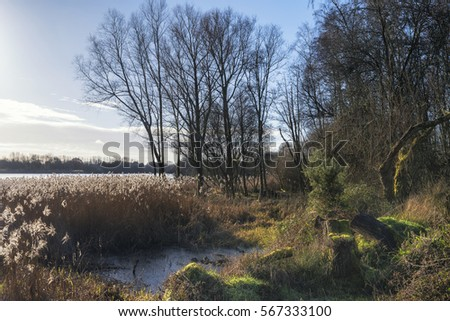 Beautiful landscape image of Winter reeds in golden sunlight