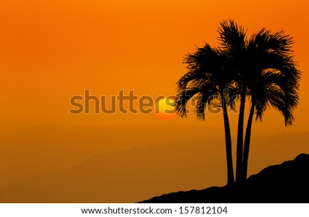 Beautiful landscape image with palm trees silhouette at sunset  - stock photo
