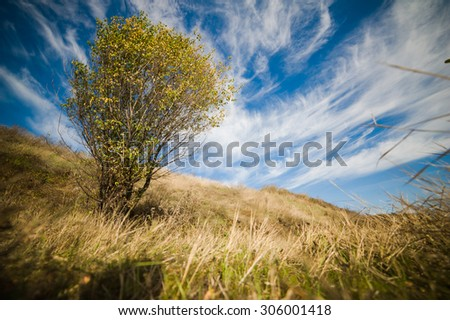 beautiful landscape in a field with a bush against the sky with clouds - stock photo