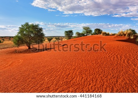 Beautiful landscape in Kalahari with big red dune and bright colours at sunset time